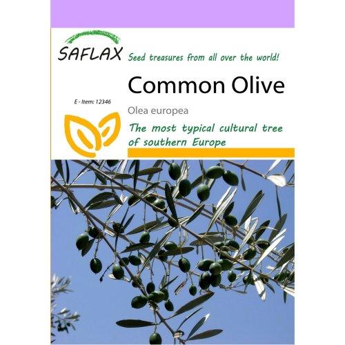 Saflax  - Common Olive - Olea Europea - 20 Seeds