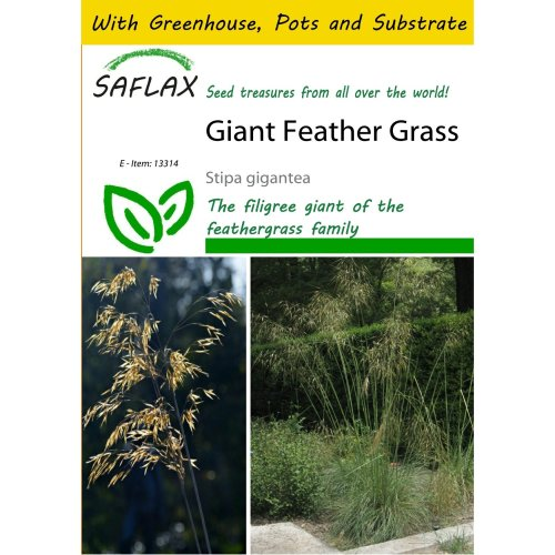 Saflax Potting Set - Giant Feather Grass - Stipa Gigantea - 10 Seeds - with Mini Greenhouse, Potting Substrate and 2 Pots