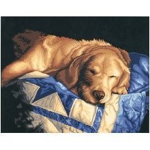 Dpw91300 - Paintsworks Paint by Numbers - Afternoon Nap