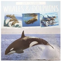 2019 Whales Dolphins Square Wall Calendar Christmas Birthday Gift Ocean Life