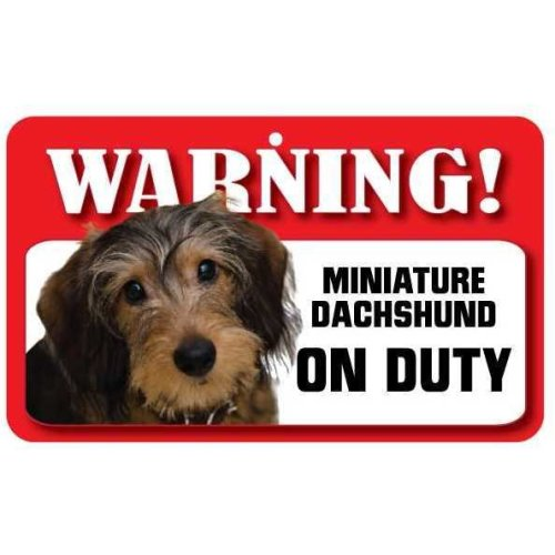 Wire Haired Miniature Dachshund Pet Sign