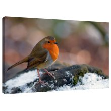 Robin Red Breast Bird Canvas Wall Art Picture Print