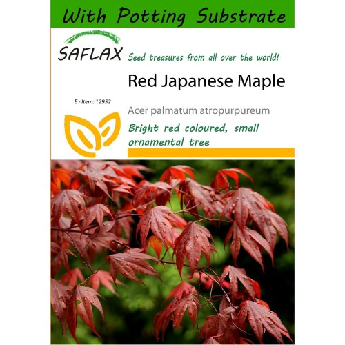 Saflax  - Red Japanese Maple - Acer Palmatum Atropurpureum - 20 Seeds - with Potting Substrate for Better Cultivation