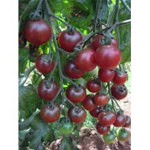 Vegetable - Tomato - Rosella F1 - 10 Seeds