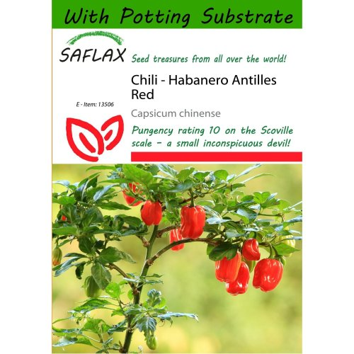 Saflax  - Chili - Habanero Antilles Red - Capsicum Chinense - 10 Seeds - with Potting Substrate for Better Cultivation