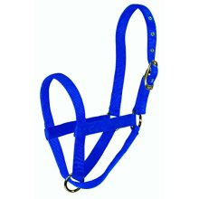 Hamilton Yearling Cow Turn Out Halter, Blue