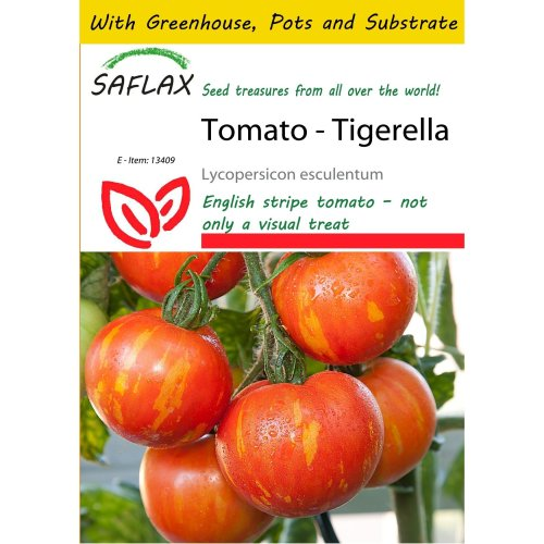 Saflax Potting Set - Tomato - Tigerella - Lycopersicon Esculentum - 10 Seeds - with Mini Greenhouse, Potting Substrate and 2 Pots