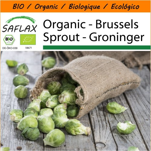 SAFLAX Garden in the Bag - Organic - Brussels Sprout - Groninger - 30 certified organic seeds  - Brassica