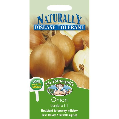 Mr Fothergills - Pictorial Packet - Vegetable - Onion Santero F1 - 75 Seeds